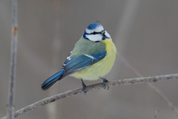 Птицы не боятся внимания фотографов