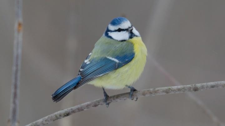 Наглые птицы оккупировали леса Волгоградской области