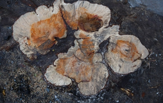 В Нижней Тавде фермер незаконно срубил деревья на полтора миллиона рублей