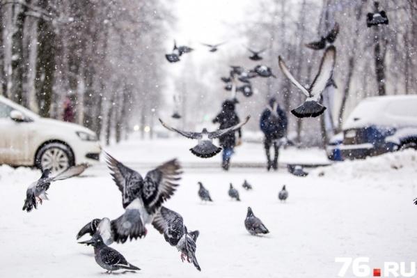 Снегопад позволяет на всё вокруг взглянуть иначе