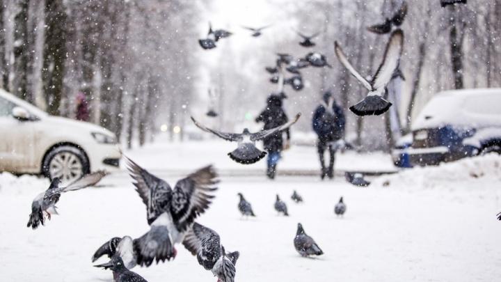В снежном царстве: как Ярославль накрыло балканским снегопадом