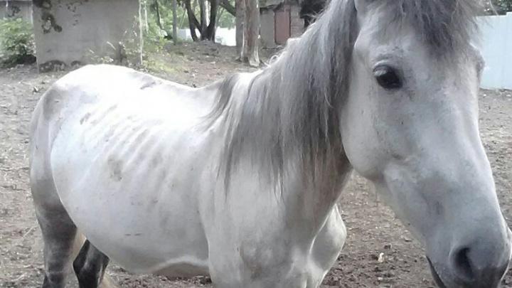 Лошади Афанасьева: казак заявил о краже животных, прокуратура проводит проверку