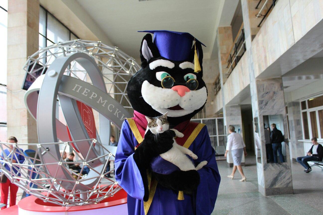 Именно кот, а не официальный символ университета – медведь – стал талисманом студентов