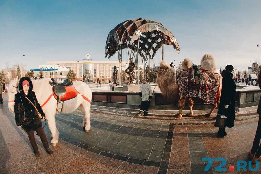 Хозяин просит называть верблюда Иннокентием. Говорит, что шерсть длинная и тёплая. Кеша, в общем, не мёрзнет, не волнуйтесь!