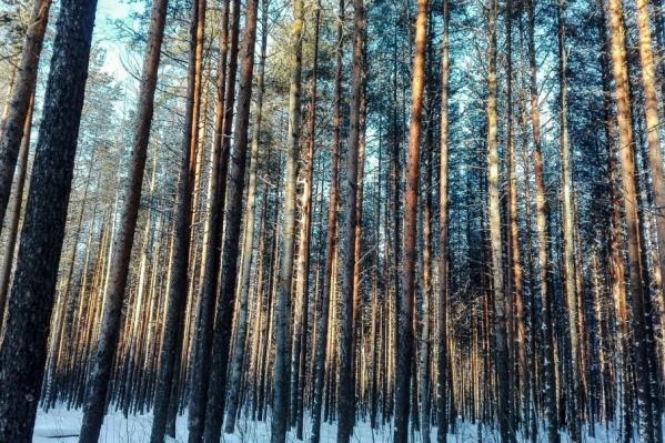 Фирма занимается лесозаготовкой