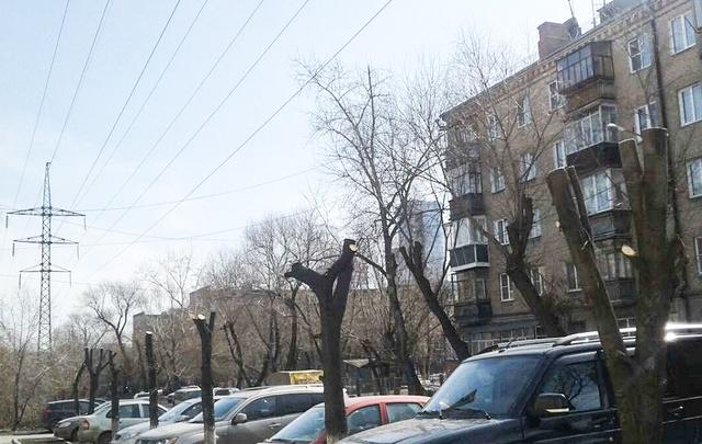 Челябинцев возмутила варварская обрезка лип в центре города