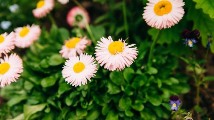 В день закрытия фестиваля цветников в Тюмени пройдёт цветочный кроссинг