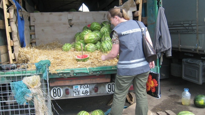 В Ярославскую область привезли 20 тонн опасных арбузов