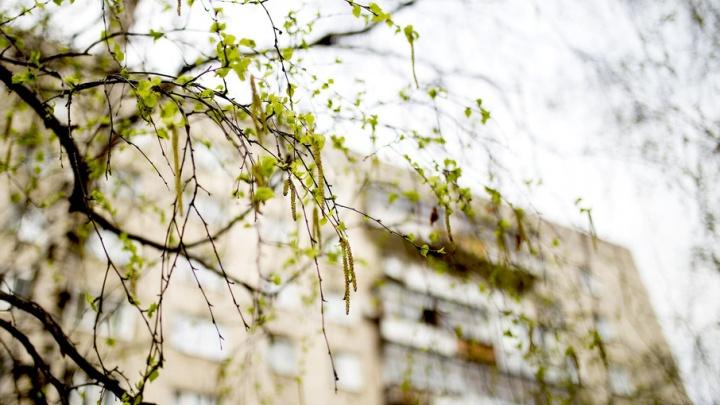 Весенний Ярославль расцвел: фоторепортаж с улиц