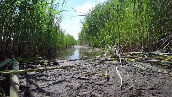 Ученые Волгограда предложили сделать из болот Кировского района зону отдыха