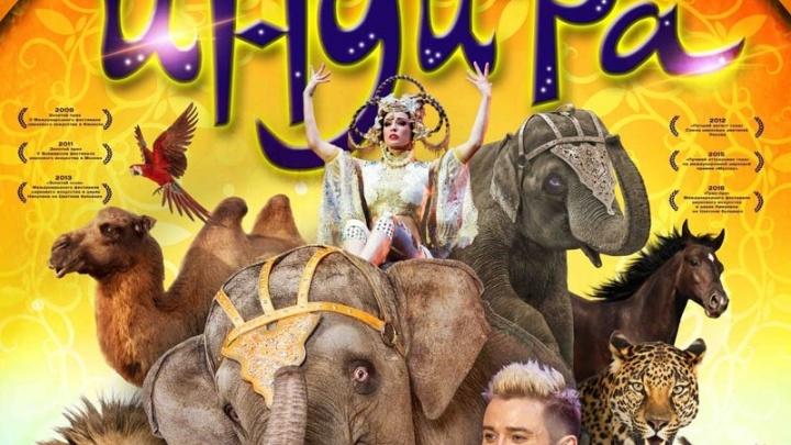 Мигель стал хореографом циркового шоу «Инди-ра»