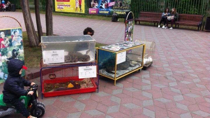 «Ужасная картина»: челябинцев возмутили условия для крокодила и змеи в парке Гагарина