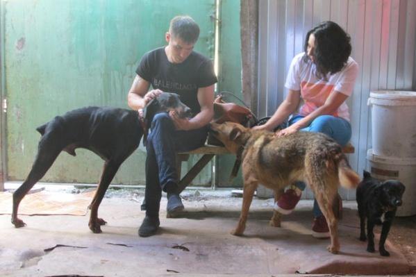 Волонтеры приюта дарят тепло всем животным, которые лишились хозяев и дома