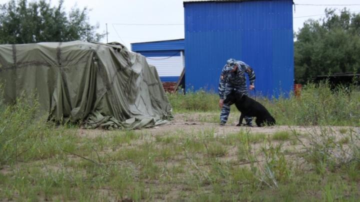В Приморском районе немецкая овчарка спасла пропавшего пенсионера