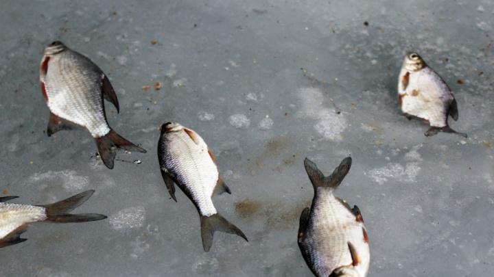 В Волжском соберут рыбаков-«незамерзаек»