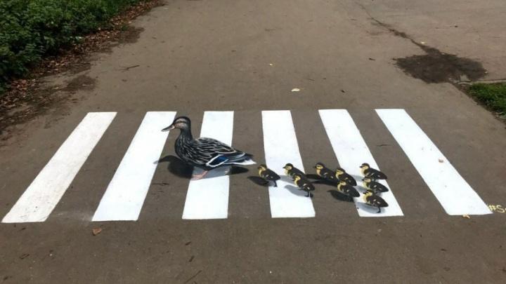 В Ярославле появился пешеходный переход с уточками