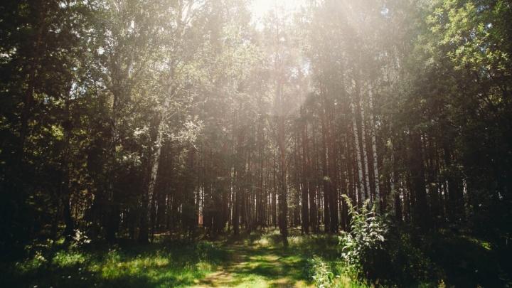 Тобольские полицейские прочесывают лес в поисках потерявшегося пенсионера