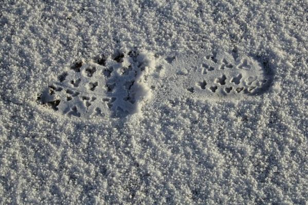К концу недели в Архангельске будет холодно и снежно