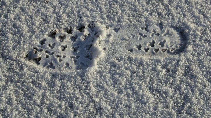 Снег и гололед ожидаются завтра в Поморье