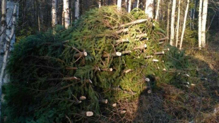 В Каменском районе за елочными браконьерами устроили настоящую погоню