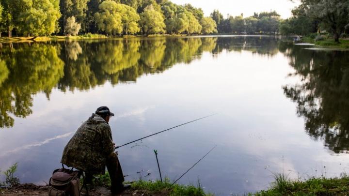 В Ярославской области будут выращивать мраморных сомов