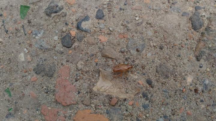 Центр Архангельска атаковали полчища тараканов
