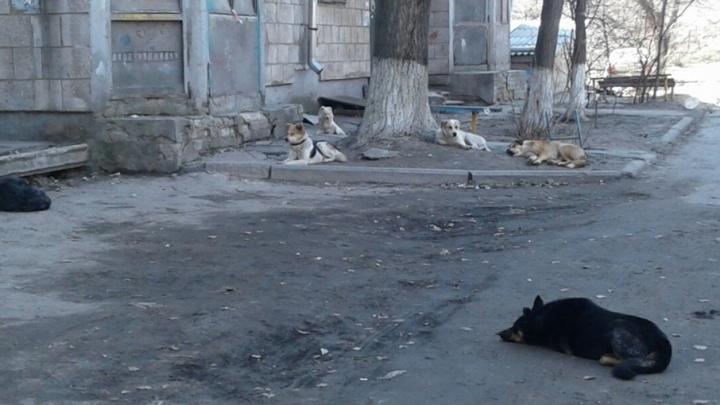 Бездомные псы держат в страхе жителей семиэтажки на проспекте Ленина в Волгограде