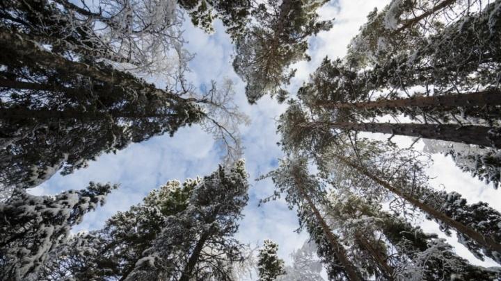 «Солнце - это ненадолго»: синоптики пообещали Поморью облачную погоду