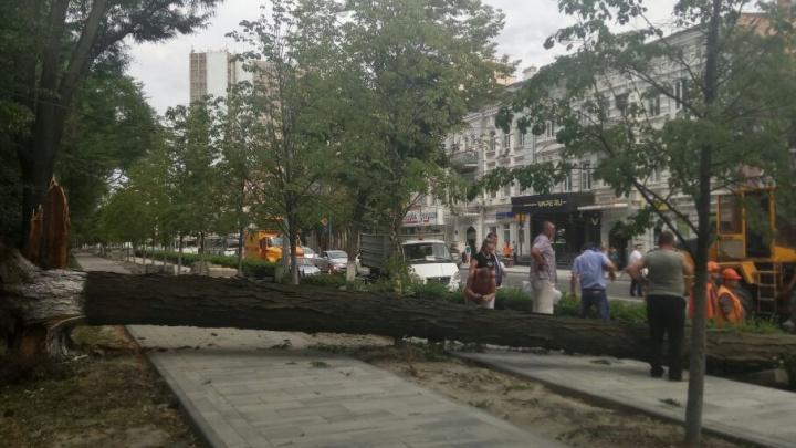 Рухнувшее дерево перегородило проезжую часть на Большой Садовой