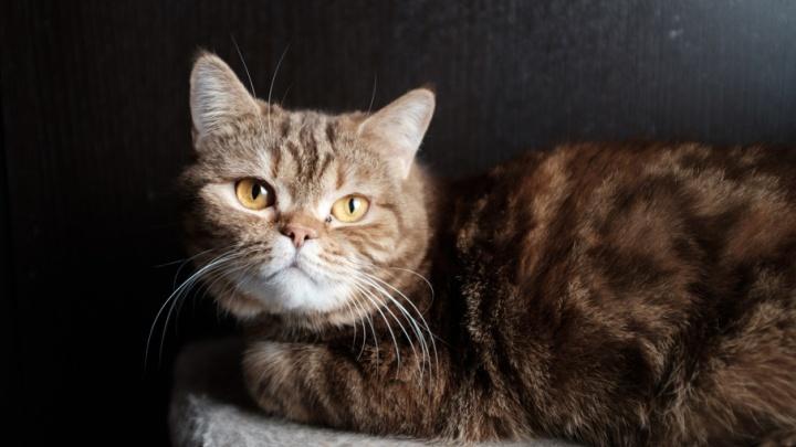 17 развлечений выходных: гладим котиков, отмечаем Первомай и идем на «тюремную» выставку