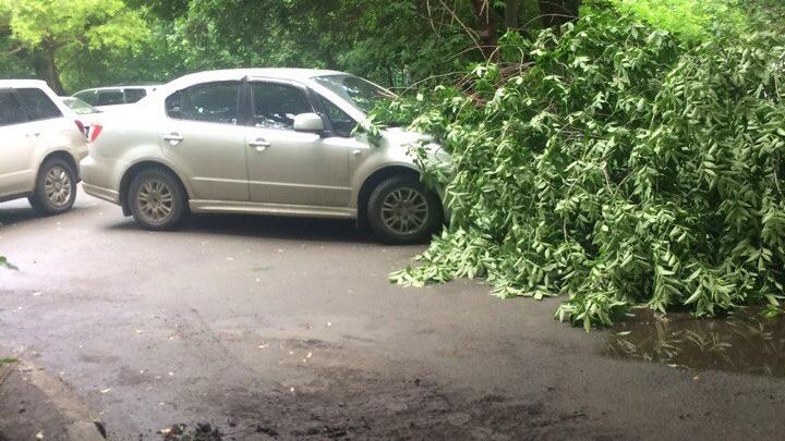 В центре Челябинска второй раз за неделю дерево упало на машину
