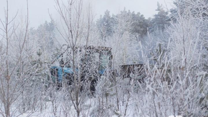 Жителю Самарской области придется выплатить 500 тысяч рублей за вырубку 12 берез