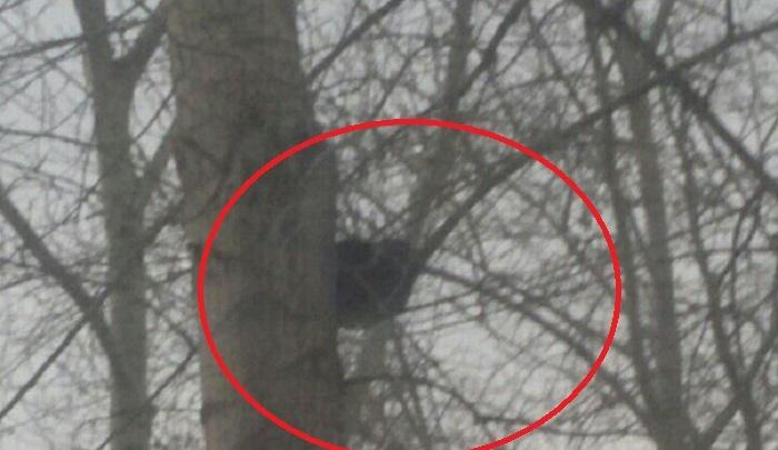 Котенка, просидевшего на дереве два дня, спасли неравнодушные тюменцы