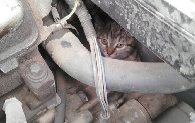Волгоградец спас забравшегося под капот автомобиля кота
