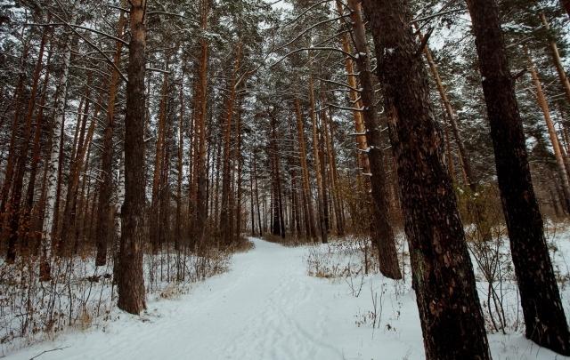 Площадка для памп-трека и 362 источника света: что появится в Затюменском лесопарке