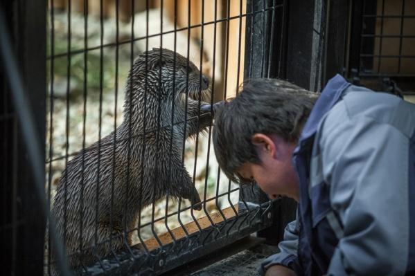 Возбуждено административное дело в отношении и.о. главного ветврача зоопарка