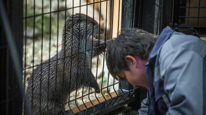 Мутная вода и просроченные лекарства: прокуратура нашла нарушения в челябинском зоопарке