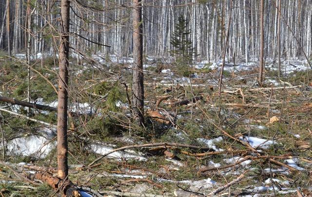 Тюменцы могут спасти лес от пожаров с помощью СМС и мобильного приложения