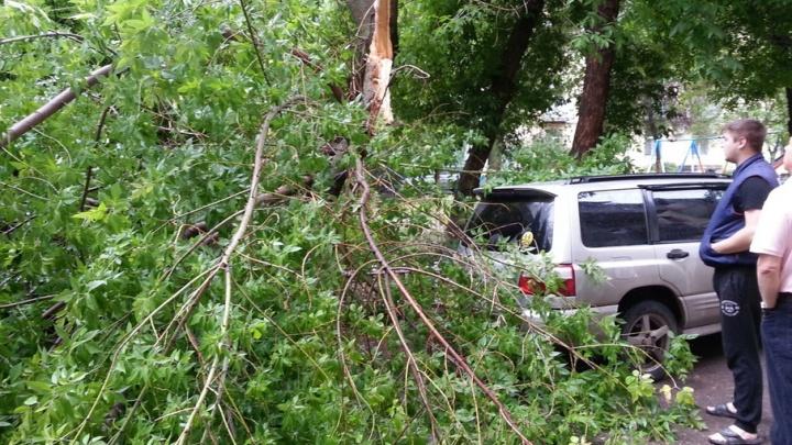 В центре Волгограда дерево рухнуло на две иномарки