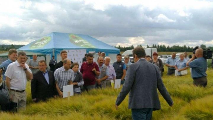 В Ярославской области начнут выращивать ячмень для пива