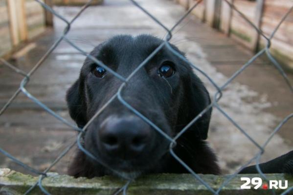 В отличие от приютов, где собаки могут жить годами, в пунктах отлова их держат не больше шести месяцев