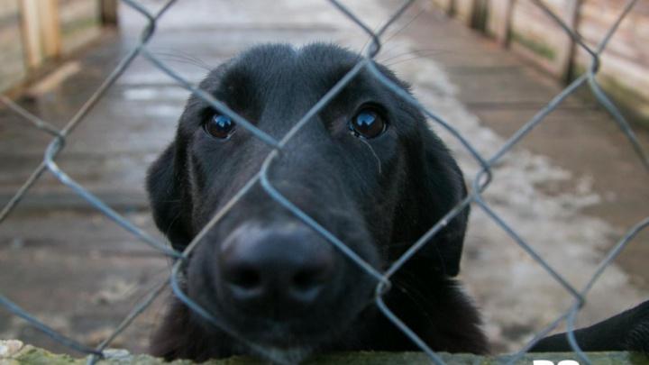 Где псы попадают в рай: на их отлов и содержание в Поморье идут миллионы