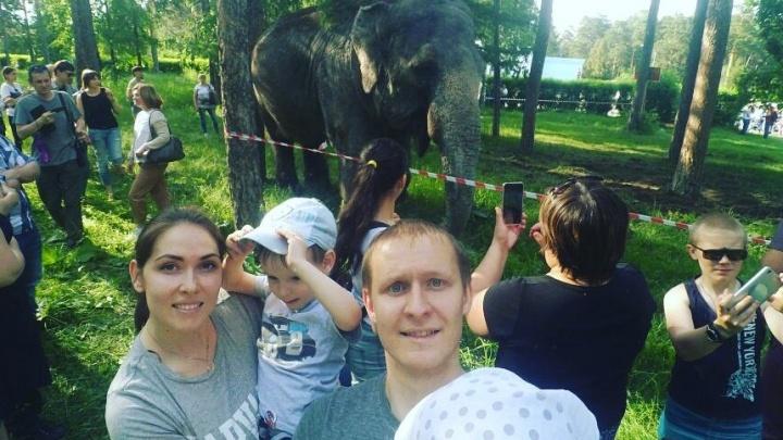 Челябинцы активно делятся в соцсетях фото и видео с прогулки со слоном