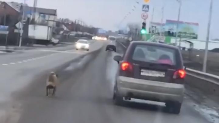 «Она долго бежала за ними, просилась в дверь»: ростовчане выбросили свою собаку прямо на дороге