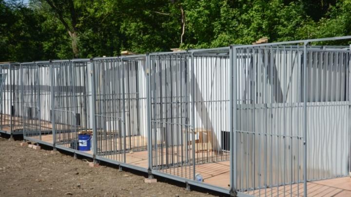Добро пожаловать: стало известно, когда новый центр безнадзорных животных в Ростове примет питомцев