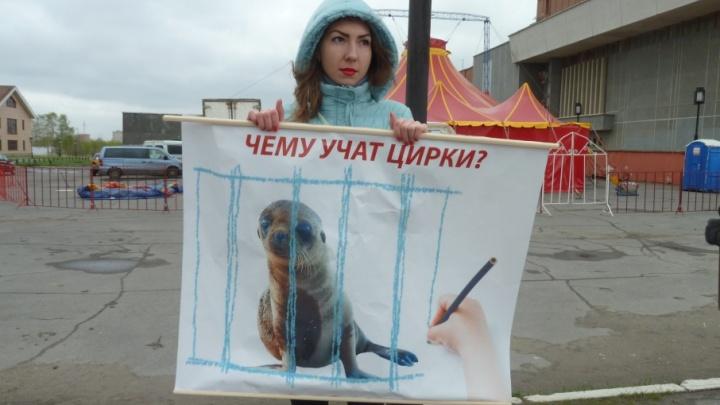 Северодвинские зоозащитники вышли на пикет против цирков, не испугавшись холода