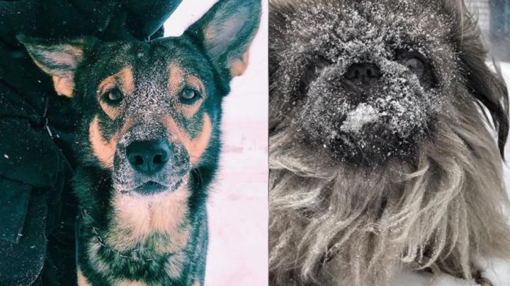 Пес Барбос — снежный нос: 10 умилительных фотографий собак из архангельских инстаграмов