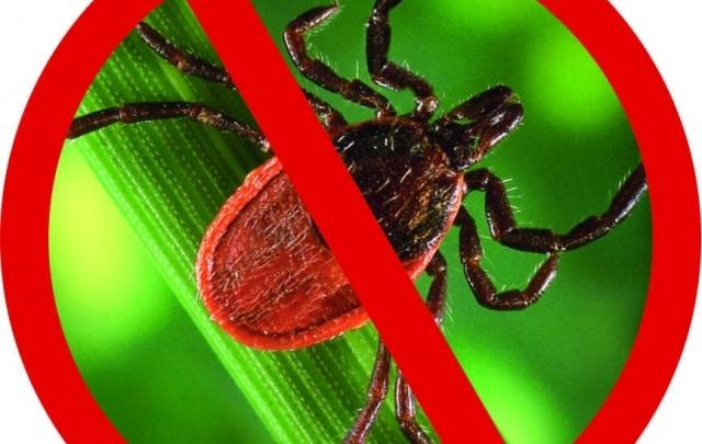 Жители Прикамья и других регионов могут застраховать себя от укусов клещей в СФ «Адонис»