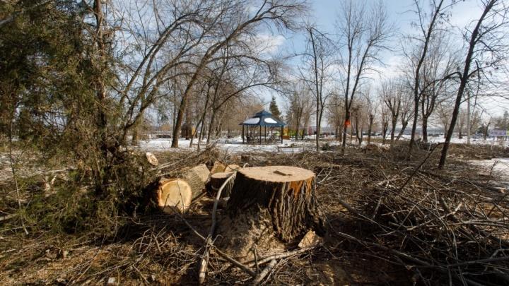 Новые деревья взамен пеньков в ЦПКиО начнут сажать уже в марте