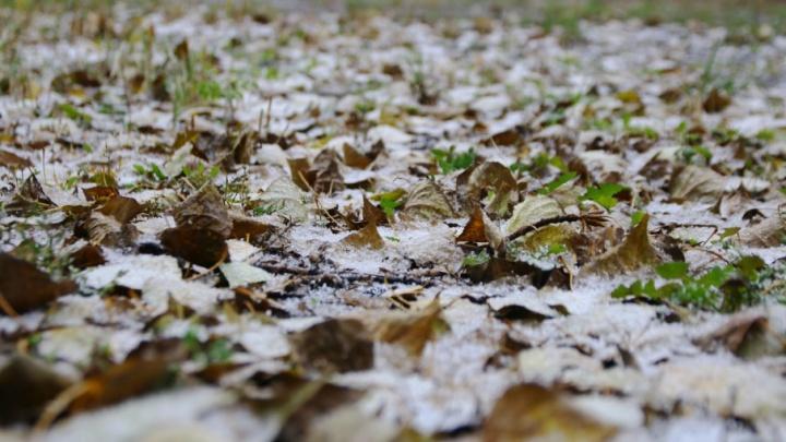 Майские морозы: самарские синоптики зафиксировали аномально низкую температуру в регионе